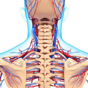 Osteoporoosilääkkeet